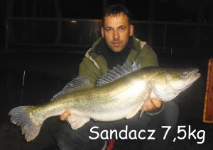 Sandacz 7,5 kg